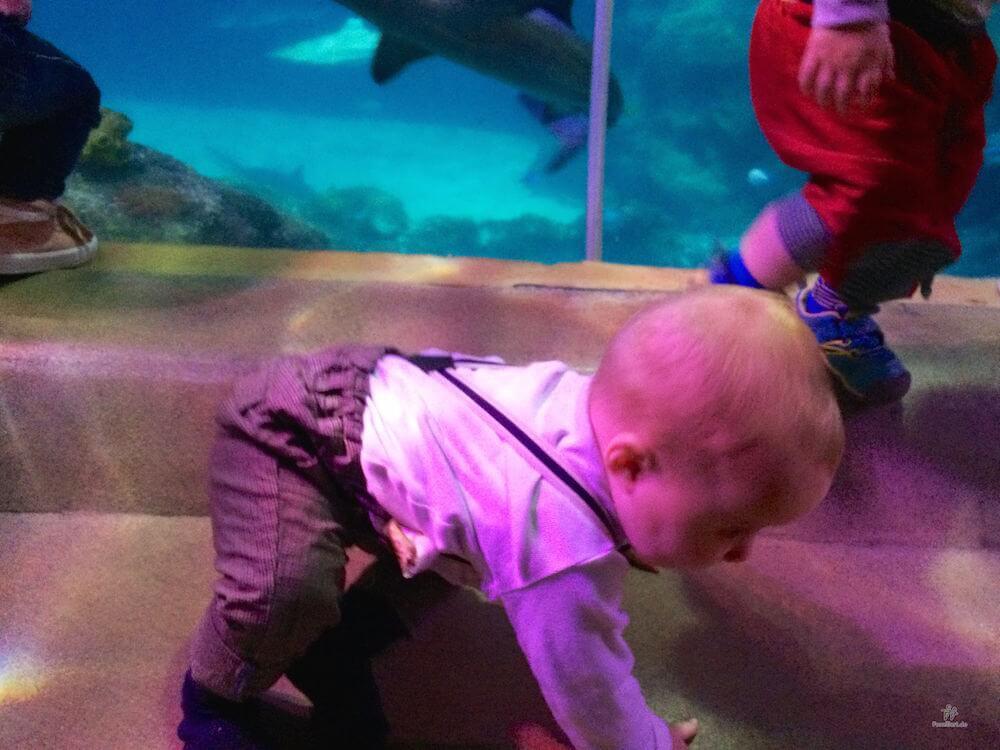 Baby SeaLife