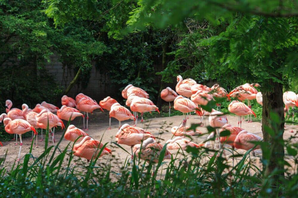 Dierenpark Emmen Flamingo