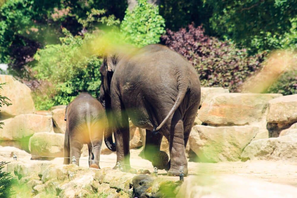 Dierenpark Emmen Elefanten