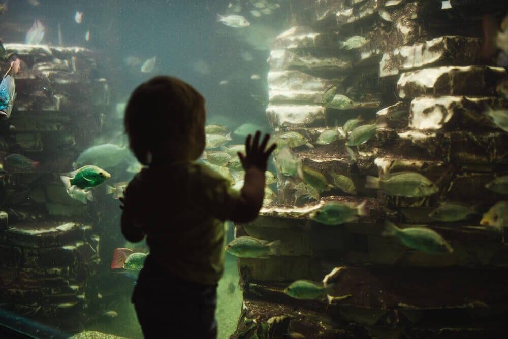 Dierenpark Emmen Fische