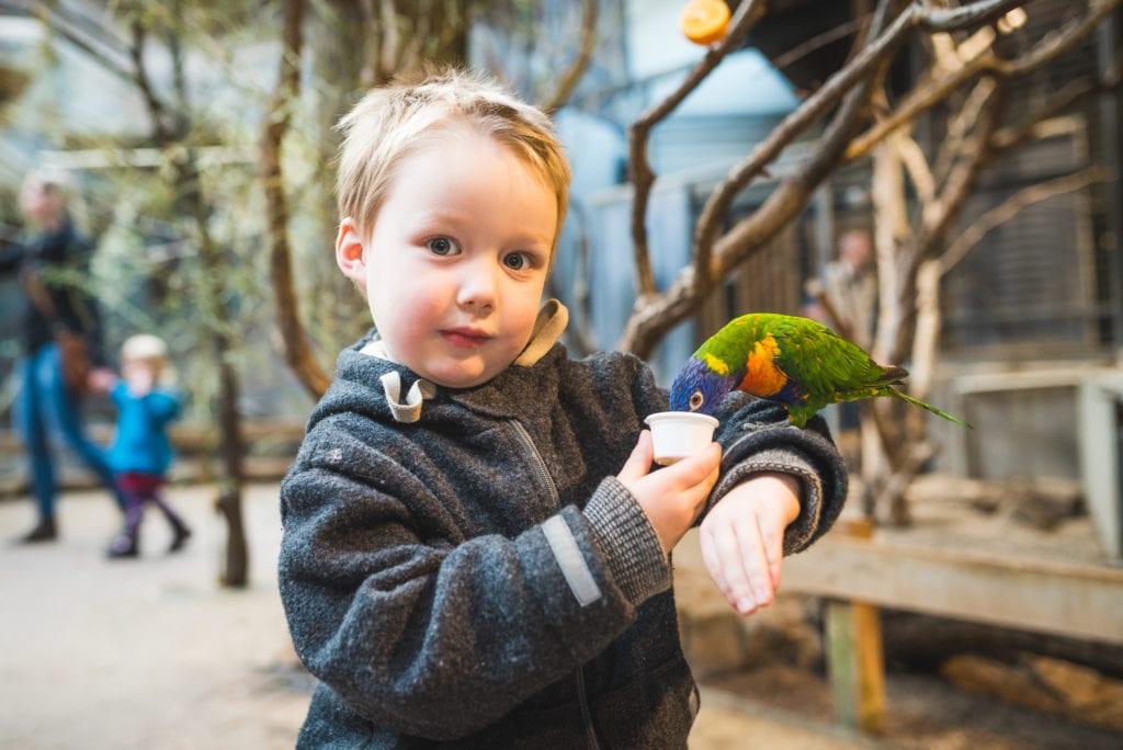 Vogel auf dem Arm | familiert.de