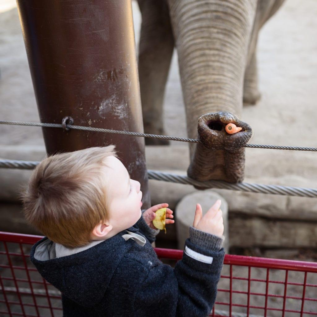 Elefanten füttern | familiert.de