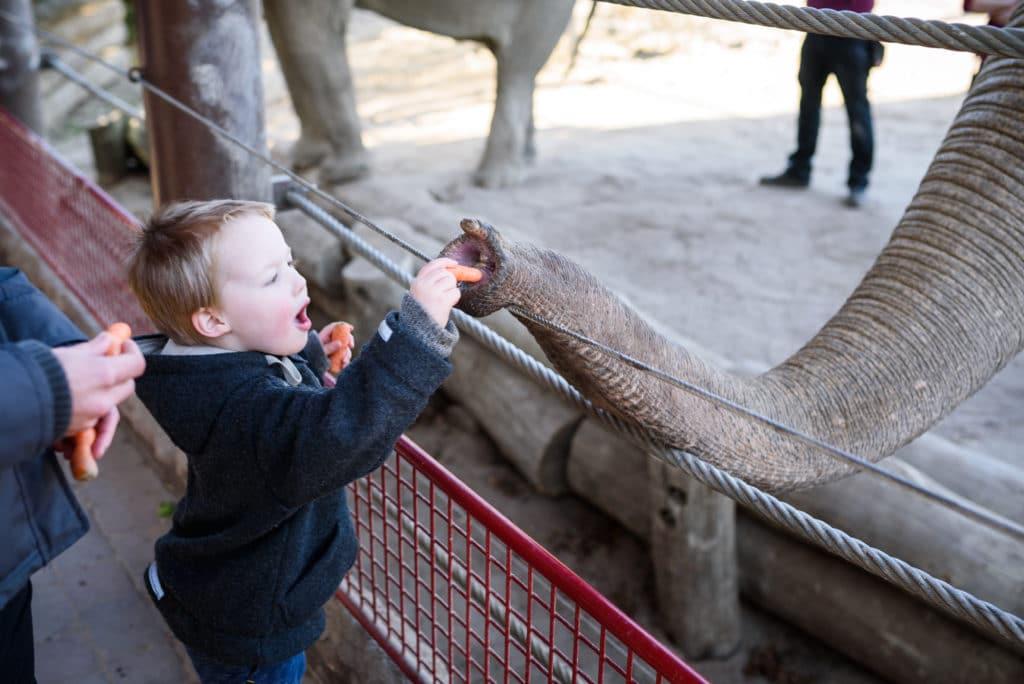 Elefant füttern | familiert.de